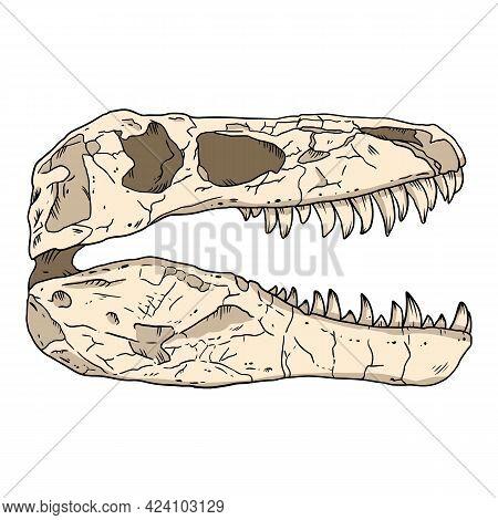 Tyrannosaurus Fossilized Skull Hand Drawn Sketch Image. Carnivorous Reptile Dinosaur Fossil Illustra