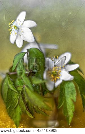 Anemone Nemorosa Flower Close-up On A Gold Background With Bokeh