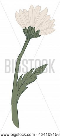 Chamomile Flower In Blossom, Floral Decor Bloom