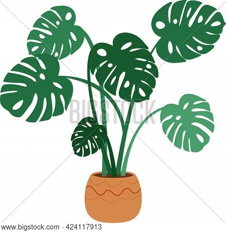 Monstera In Pot Isolated. Home Plant Monstera Leaves On White Background. Vector Illustration.