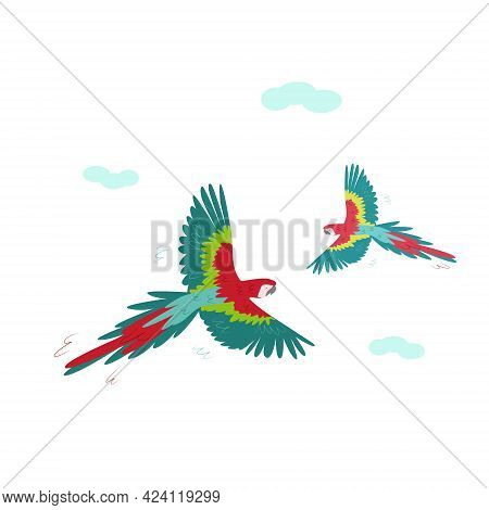 Two Beautiful Red Macaws Are Circling In The Sky. Vector Tropical Parrots Isolated On A White Backgr