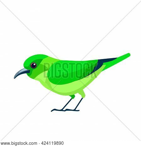 Green Honeycreeper Is A Small Bird In The Tanager Family. Chlorophanes Spiza. Exotic Blue Bird Carto