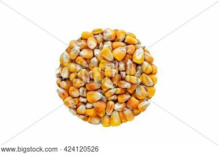 Whole Corn Seed Isolate In The Shape Of A Circle. Cereals, Agricultural Crops. View From Above.