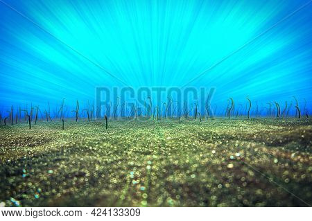 Unrealistic Underwater Photo Of A Rays Of Light Over A Eel Garden. From A Scuba Dive At The Canary I
