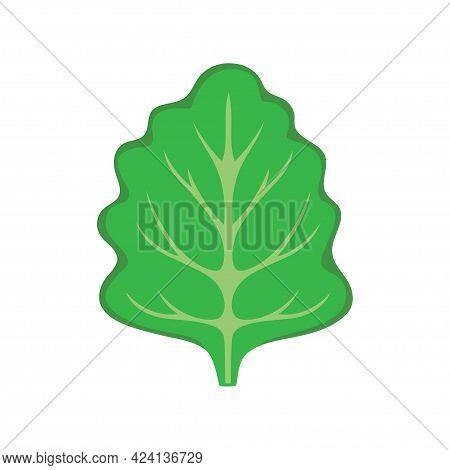 Vector Illustration Of Green Fresh Lettuce, Cartoon Organic Vegetable Isolated On White Background