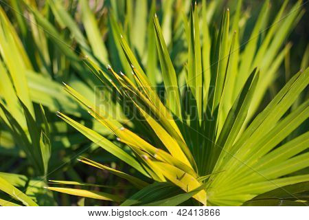 lush green small palm, sunny day, texture of leaves