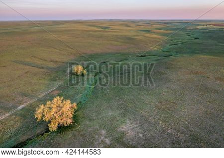 lonely trees along a seasonal creek in shortgrass prairie, Pawnee National Grassland in Colorado, aerial view at sunrise