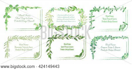 Squarish Frames With Rounded Corners And Hand Drawn Culinary Herb Twigs And Leaves. Laurel, Oregano,