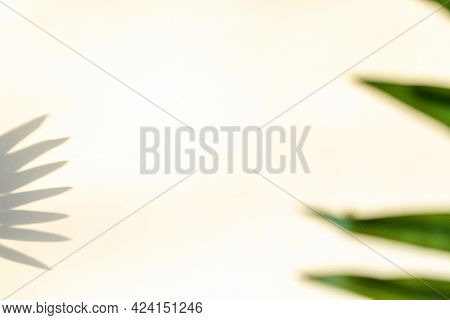 Shadow Summer Background. Plant Leaf Shadows On White Wall In Abstract Tropical Sunlight Texture. Fl