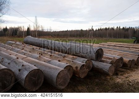 Large Wooden Logs For Construction, Felled Tree Trunks In Large Numbers. The Concept Of Construction