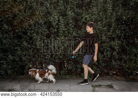 Teenage Boy Walks With Dog On Leash Along The Sidewalk Along Green Thickets.