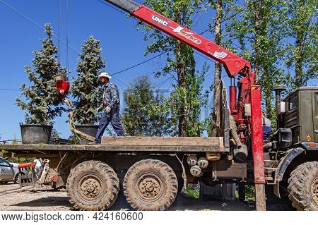 Moscow Region, Russia, June 05, 2021 Workers Load Small Conifers Onto A Truck To Deliver Them To A C