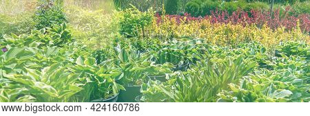 Sale Of Young Seedlings In The Garden Center. Rows Of Pots In A Plant Nursery. Banner With Sun Flare