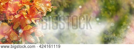Summer Background With Orange Daylily Flowers. Panoramic Floral Banner With Copy Space And Bokeh.