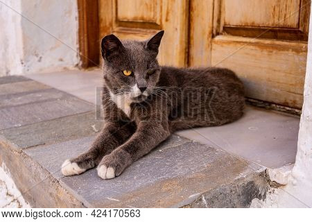 Yellow Eyed Angry Grey And White Cat Lying At The Doorstep  In Plaka Town, Milos Island, Greece.