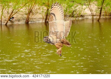 Detailed Wild Eagle Owl, The Bird Of Prey Flies With Spread Wings Over A Green Lake. Looking For Pre