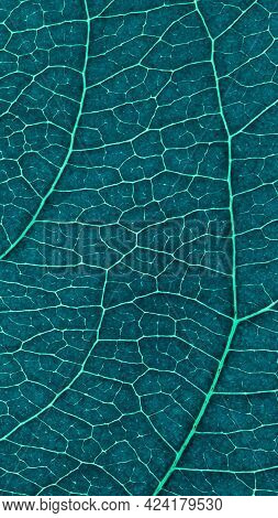 Leaf Of Fruit Tree Close-up. Dark Blue And Turquoise Tinted Mosaic Pattern Of Veins And Plant Cells.