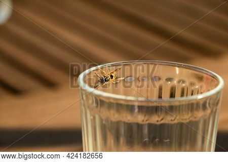 Close-up Of A Bee On A Glass Rim
