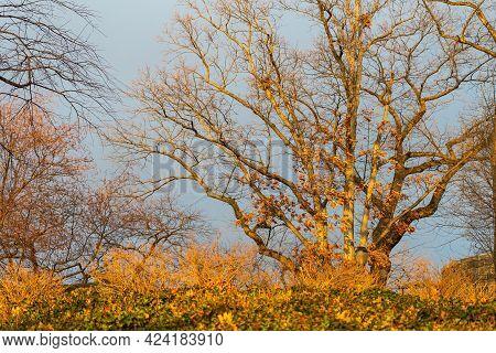 Autumn Scene, Fort Tryon Park, Upper Manhattan Alongside Hudson River, New York