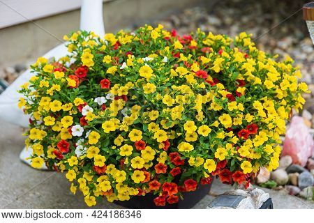 A Planter Full Of Red, Yellow And White Million Bells Flowers Growing Larger Every Day