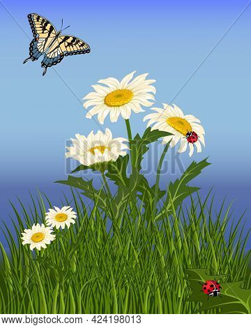 Illustration With Camomiles In The Grass.chamomiles In Green Grass, Butterfly And Ladybugs On A Colo