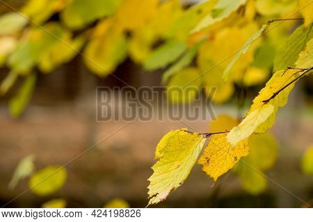 Fall, Autumn, Leaves Background. A Tree Branch With Autumn Leaves On A Blurred Background. Landscape