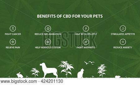 Green Information Poster Of Cannabidiol Benefits For Your Pets With Infographic Of Benefits And Silh