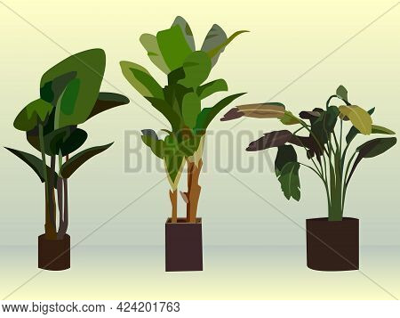 Illustration With A Set Of 3d Images Of Flowerpots For Decorating The Interiors Of Apartments And Of