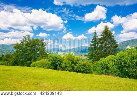 Countryside Summer Landscape In Mountains. Trees On The Grassy Meadow. Rural Fields On The Distant H
