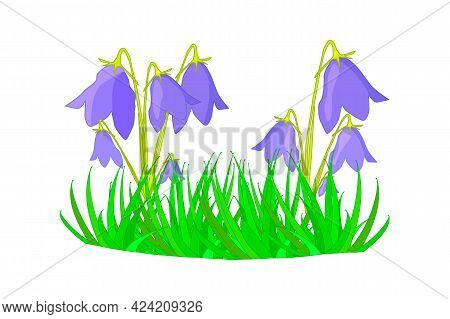 Grass With Flower Isolated On White Background. Spring And Summer Grass. Bluebells Growing Of Lawn.