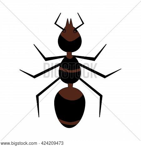Brown Ant Isolated On White Background. Red Fire Ant Icon. Top View Insect Silhouette. Simple Flat S