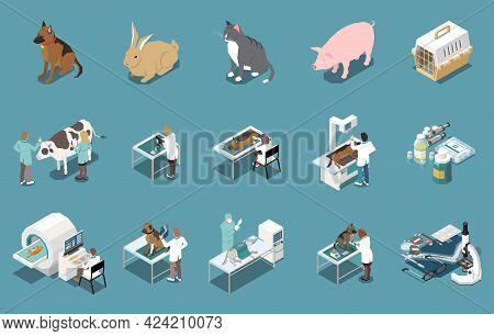 Veterinary Clinic Mri Xray Examination Dogs Livestock Cow Checkup Pets Vaccination Cats Carrier Isom