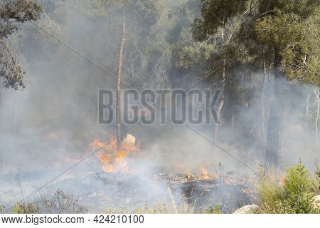 Mevasseret Zion, Israel - June 19th, 2021: A Pine Forest Fire On The Municipal Border Of A Town Near