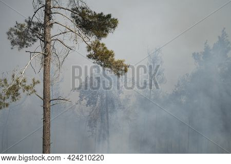 Mevasseret Zion, Israel - June 19th, 2021: A Pine Forest On Fire On The Municipal Border Of A Town N