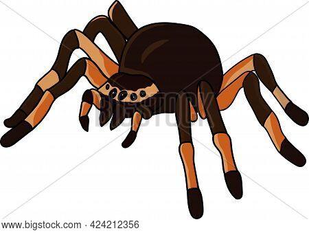 Tarantula Spider. Hand-drawn Sketch Of Spider. Vector Illustration