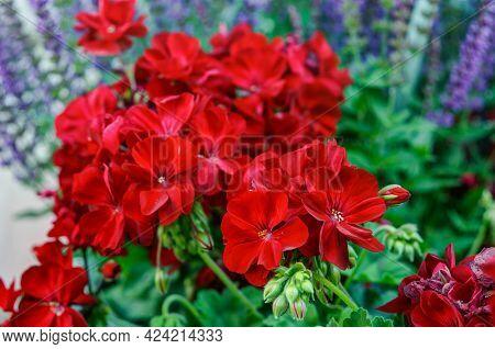 Red Blooming Flowers