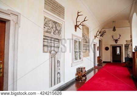 Castle Interior, White Corridor, Hunting Trophies, Antlers, Red Carpet, Renaissance Decorative Plast