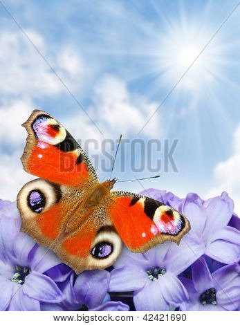 Spring blossom and a butterfly against sunny sky , natural background - close up with shallow DOF. poster