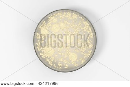 The Germs In The Petri Dish, 3D Rendering.