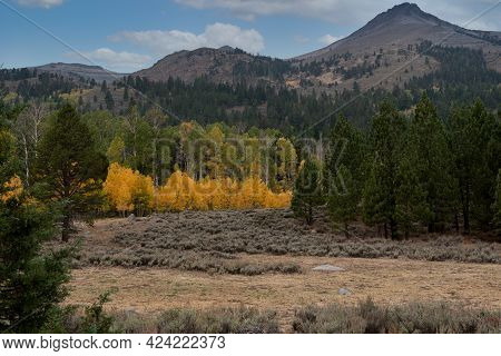 Woods Lake Area Near Highway 88 In The Fall, Featuring Yellow Aspen Leaves, Coniferous Trees With Gr