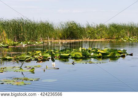 Picture Of The Biosphere Of The Danube Delta In Romania, Protected Wilderness