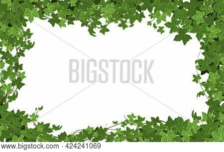 Ivy Climbing Plant Frame Composition With Rectangular Illustration And Empty Space Surrounded By Bra