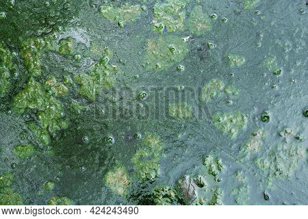 Background With A Green Mud On The Puddle Surface