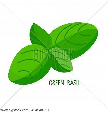 Green Basil. Fresh Leaves Organic Vegetable Isolated On White Background. Overhead View. Flat Design