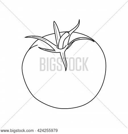 Tomato Fruit Vector Illustration. Tomato Icon Isolated On White Background