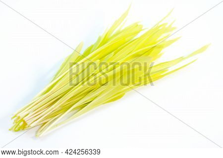 Yellow Corn Sprouts On A White Background. Microgreens Of Corn In Closeup. Yellow Young Sprouts.