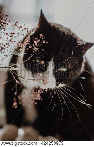 Black Cat With A White Nose And Neck Is Sitting On A Table And Chewing On Pink Summer Flowers.