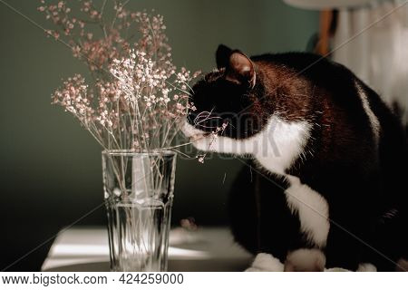 Black Cat With A White Neck And Abdomen Sits On A White Wooden Table And Harbors A Pink Summer Flowe