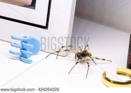 Large Spider Hidden Indoors, Venomous Animal, Arachnophobia Concept