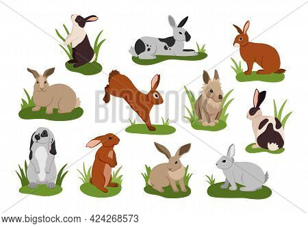 Cartoon Rabbit. Cute Bunnies With Various Fur Colors. Isolated Funny Pets Lying And Jumping On Grass